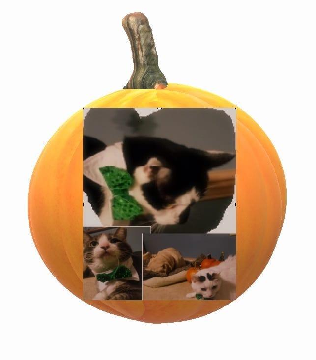 Pumpkinfaces.jpg