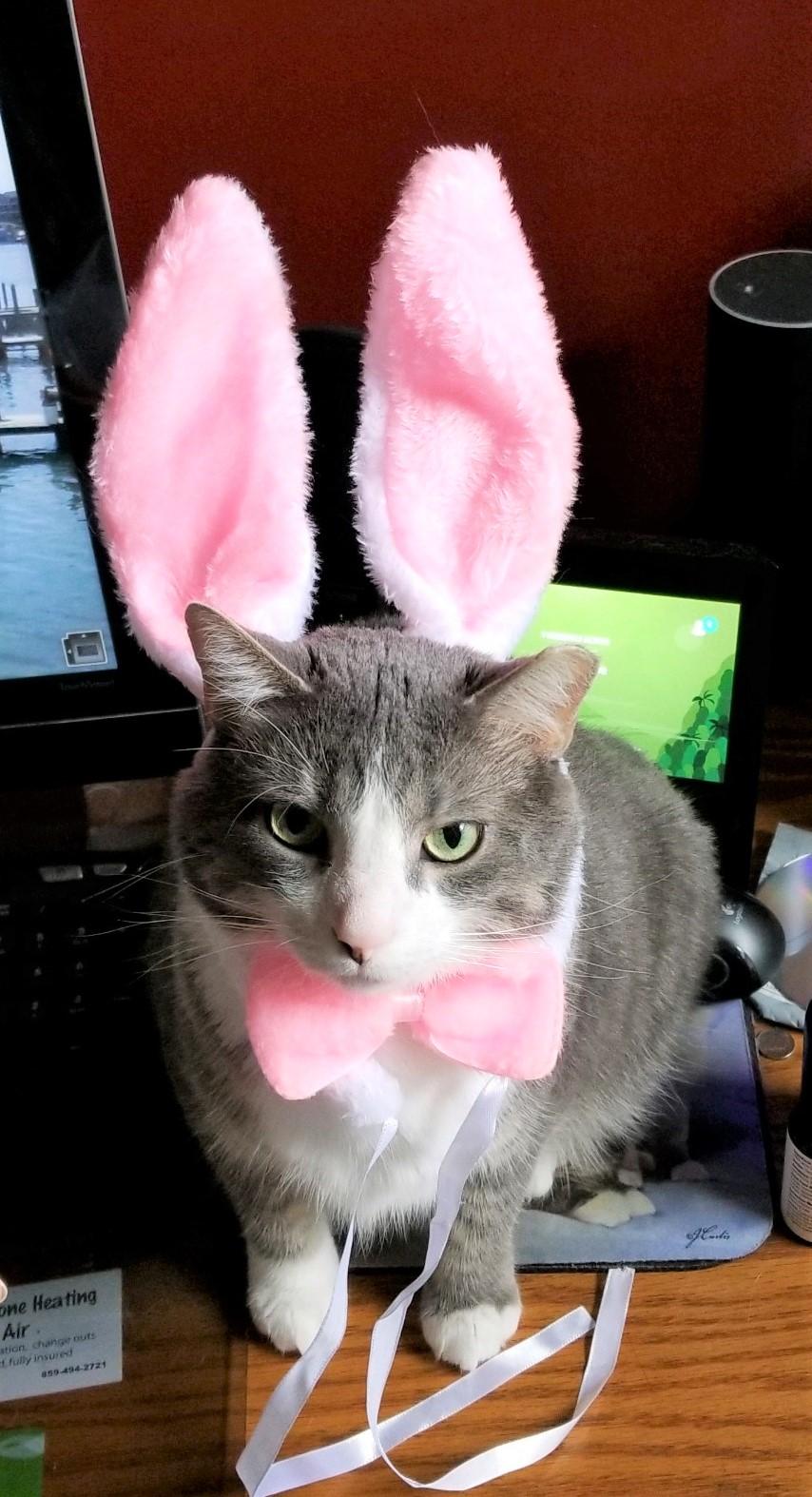 Easter-Huck.jpg